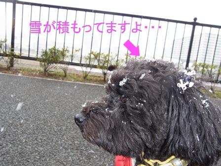 雪つもりルナ