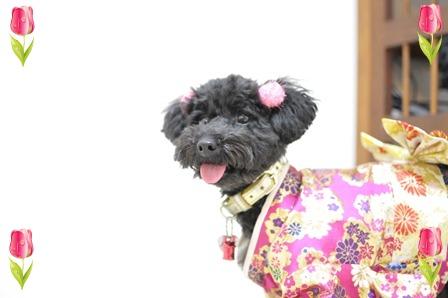 ピンク着物②