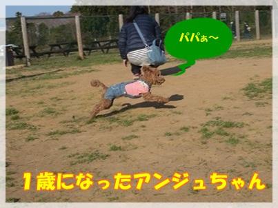 アンジュ走る