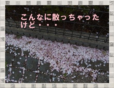 散った花びら