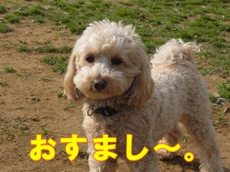 ぷーちゃんおすまし