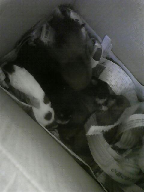 【保護】5赤ワン・雌犬は発見できず、申し訳ない