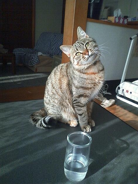 岩手猫縮小版