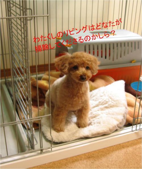 大掃除_convert_20111229180700