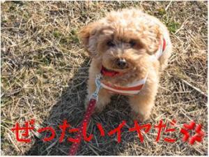 河川敷2_convert_20120212182052