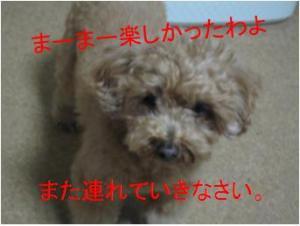 河川敷_convert_20120212182125