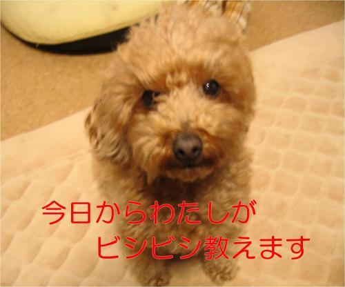 勉強_convert_20120303094308