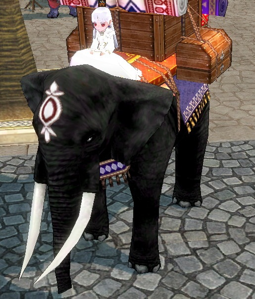 初ゾウに試乗なう!