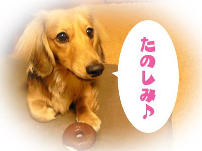 P1130076_tanoshimi1.jpg