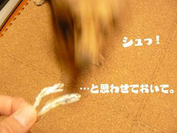 P1150707a.jpg