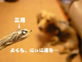 P1150718a.jpg