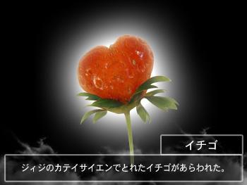 P1170242_ichigo.jpg
