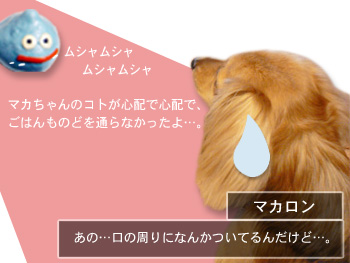 shirobuta004.jpg