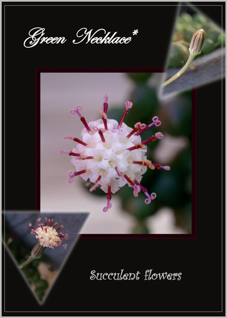 グリーンネックレスの花A