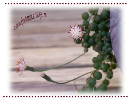 グリーンネックレスの花B