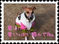 iphone_20120123211706.jpg