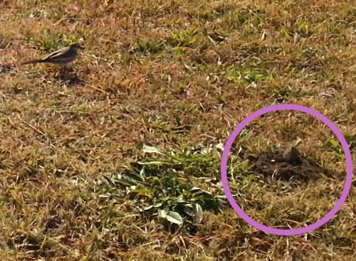 小鳥とモグラ?