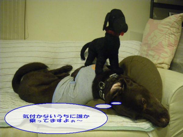 mmkk8_11_084_20111203171053.jpg