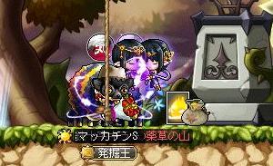 Maple9845a.jpg