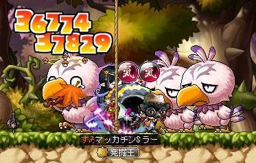 Maple9886a.jpg