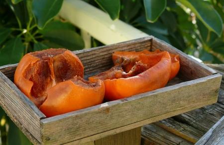 渋柿のおかわり