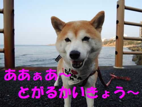 14020311.png