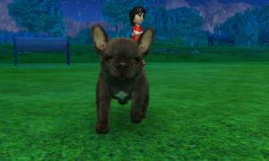 dogs0551.jpg