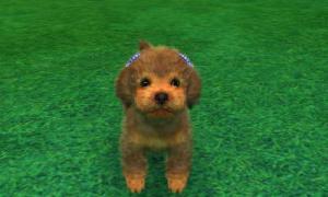 dogs0562.jpg