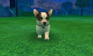 dogs0569.jpg