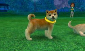 dogs0579.jpg