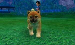 dogs0585.jpg