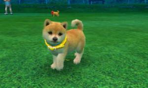 dogs0586.jpg