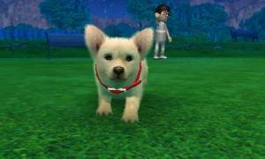 dogs0587.jpg