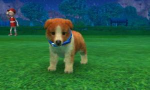 dogs0619.jpg