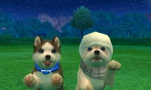 dogs0620.jpg