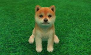 dogs0633.jpg