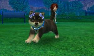 dogs0661.jpg