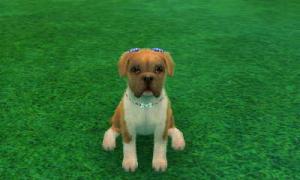 dogs0663.jpg