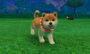 dogs0664.jpg