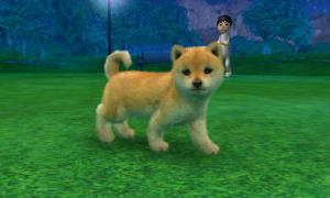 dogs0668.jpg