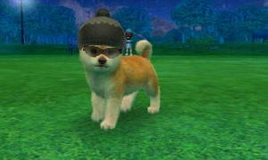 dogs0677.jpg