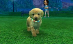 dogs0681.jpg