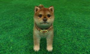 dogs0685.jpg