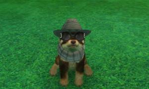 dogs0686.jpg