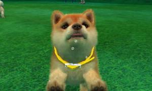 dogs0693.jpg