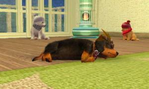 dogs0707.jpg