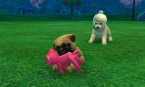 dogs0710.jpg
