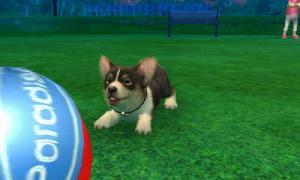 dogs0716.jpg