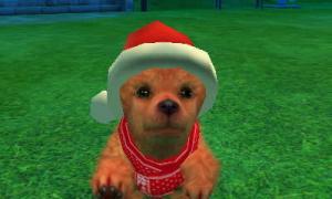dogs0717.jpg