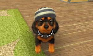 dogs0720.jpg